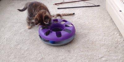 Gatos aprontando todas seja de artes ou de fofura, eles são demais!!!