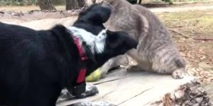 Gatos e cães as relações mais engraçadas que se possa imaginar!!!