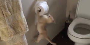 Gatos e cães que adoram fazer bagunça com papel higiênico!!!