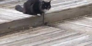 Gatos versus ratos, esses ratinhos tiveram muita sorte hein!