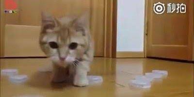 Goleiro gato, você não vai acreditar nessa habilidade, confira!