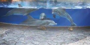 Golfinhos encantados com esquilos, olha só que coisa mais linda este vídeo!!!
