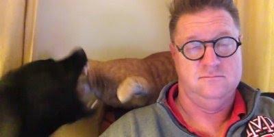 Homem chega em casa, liga a televisão e o gato e cachorro começam a brigar!