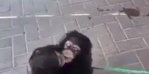 Irmãos macacos que foram resgatados separadamente trocam abraços!!!