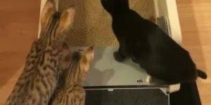 Limpador automático de areia de gatos, agora ficou fácil manter a caixa limpa!