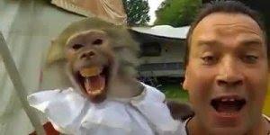 Macaca grita junto com seu dono, é muito engraçado kkk, confira!