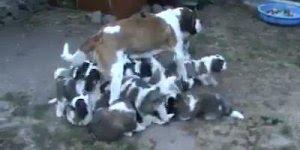 Mamãe com seus filhotinhos, eu tentei contar quantos eram mais não consegui!!!