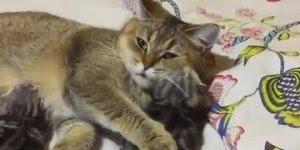 Mamãe gato com seus filhotinhos fofinhos! O milagre da vida!!!