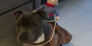 Melhor roupa para seu cachorro, você se diverte com ele hahaha!
