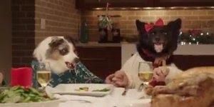 Mesa de jantar com cachorros e gato, uma montagem muito legal!