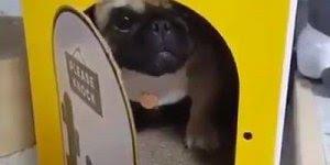 Momento fofura do dia, este cachorrinho bravo por fechar a porta, hahaha!!!