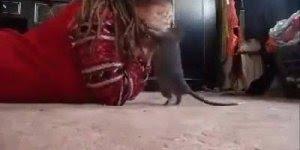 Mulher brincando de esconde esconde com uma ratazana, olha só que incrível!!!