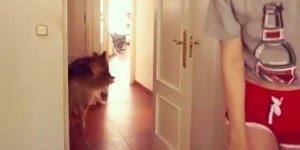 Mulher se esconde de três cachorros atrás da porta e quando acham ela...