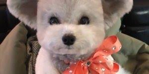 O cachorrinho mais fofo da internet esta neste video, confira!