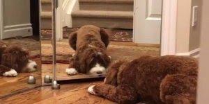 O que acontece quando se coloca um cachorro em frente a um espelho!
