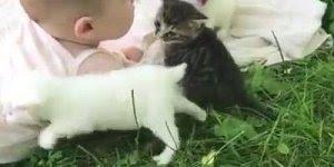 O vídeo mais fofo que você verá hoje, bebê com filhotinhos de gatos!!!