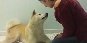 Olha só o amor entre esse cachorro e sua dona, ele entende tudo que ela fala!!!