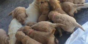 Olha só quantos filhotes esta cadela teve! Gente é muita fofura junto!!!