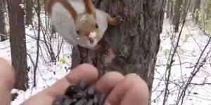 Olha só que legal estes esquilos vindo pegar comida na mão deste homem!!!