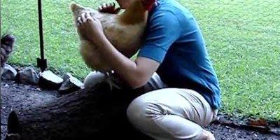 Os melhores momentos de carinho com animais, que coisa fofa!