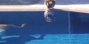 Os sustos mais engraçados de gatinhos, kkk! Veja como eles são sismados!!!