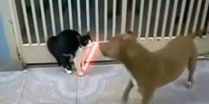 Para os grandes fãs de Star Wars, veja épica luta do gato com um sabre de luz!!!