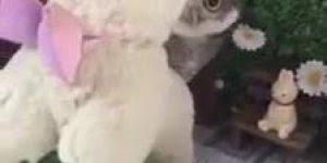 Para quem é fã de corujas olha que coisinha mais fofa esta pequenina!!!