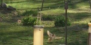 Passarinho bravo com esquilo que esta pegando comida do alimentador de pássaros!