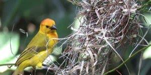 Passarinho fazendo ninho, olha só que cozinha mais linda este passarinho!!!