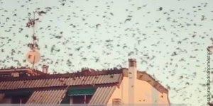 Pássaros voando voando todos juntos em vários lugares diferentes, confira!!!