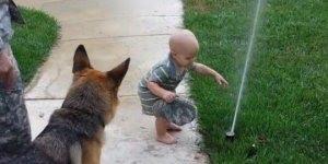 Pastor alemão brincando com água a garotinha adora, muito fofo!!!