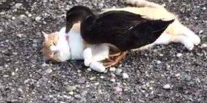 Patos, um animal que não gosta muito de companhia, hahaha!!!!
