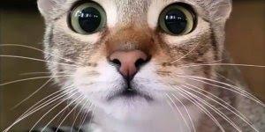 Porque falam que os gatos irão dominar o mundo? Descubra neste video!
