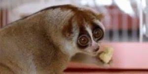 Que criaturinha mais fofinha! Veja como esta gostoso o que ele esta comendo!