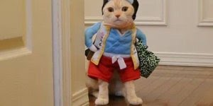 Quem ama gato, vai amar essa fofura, gato de roupa que coisa mais linda!