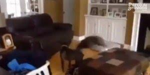 Reações de cachorros quando os donos saem de casa, para rir muito!