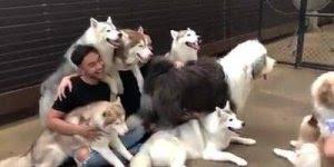Selfie com a família, olha só que coisa mais linda estes cães!!!