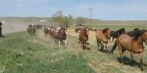 Soltaram a cavalaria no campo, veja que cena mais legal de se ver!