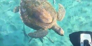 Tartaruga marinha chegando pertinho de um barco, olha só que incrível!!!