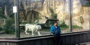 Tigre branco ataca homem em zoológico, mas algo salva ele!