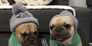 Tratando dos cachorros na horas do almoço, que coisa mais engraçada e fofa!