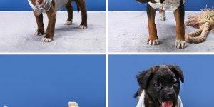 tutorial de roupinhas para você mesma fazer para seus cãezinhos!!!