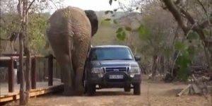 Vídeo com animais causando o terror nas estradas, confira!!!