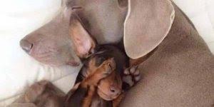 Vídeo com as fotos de animais mais lindas que você vai ver hoje!!!