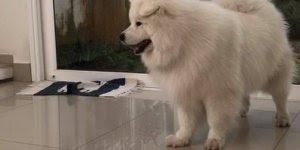 Vídeo com cachorrinha linda ensinando o irmão a não pegar cesta da mãe!!!