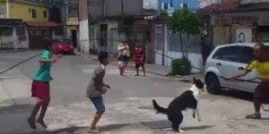 Vídeo com cachorro pulando corada com as crianças, olha só que legal!!!