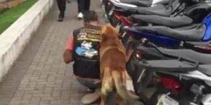 Vídeo com cachorro que anda na garupa da moto de seu dono!!!