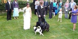 Vídeo com cachorros que aprontam todas, é muito engraçado essa galerinha!!!