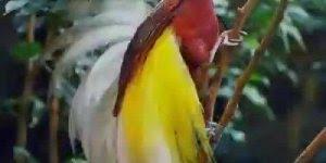 Vídeo com fotos de passarinhos, um mais lindo que o outro! Deus é maravilhoso!!!