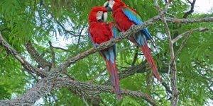 Vídeo com fotos dos animais do Pantanal, um lugar cheio de natureza e vida!!!